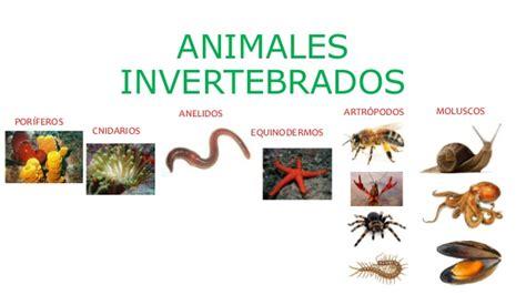 imagenes animales artropodos animales invertebrados