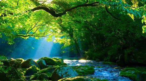 beleza da natureza fotos e imagens m 250 sica relaxante harpa e natureza sinta se no para 237 so