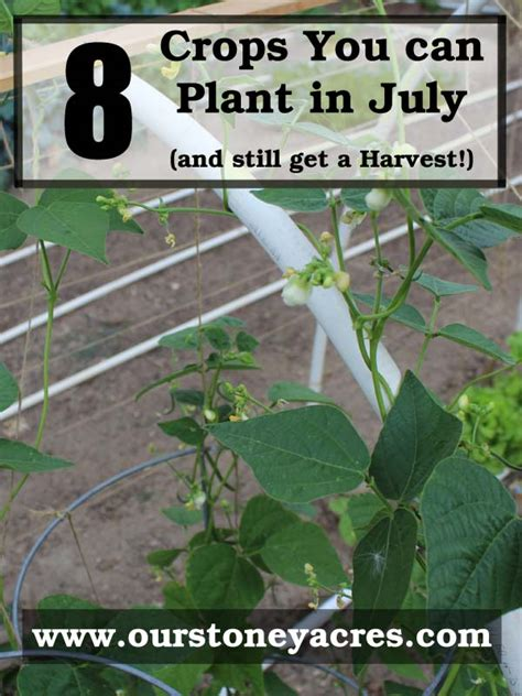 can you buy plants on amazon what can you plant in july and still get a harvest