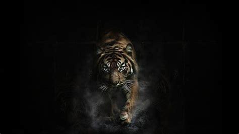 Tiger In Black Background   animal wallpaper   Pinterest
