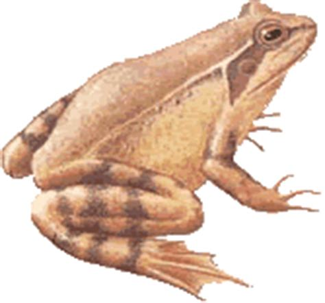 imagenes animales que respiran por la piel anfibios