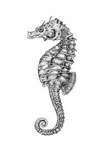 drawing of the week seahorse studioten15