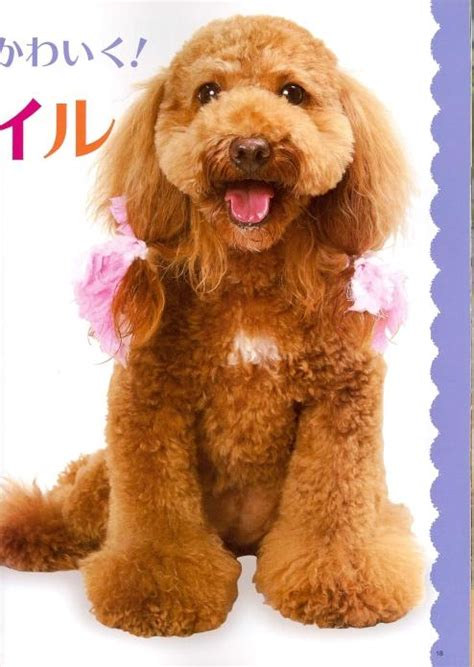 poodle grooming styles images poodle grooming styles image search results