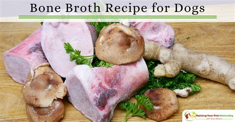 bone broth recipe for dogs healthy recipes bone broth recipe for dogs raising your pets naturally with