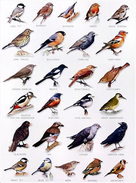 garden bird chart chart bird and feathers