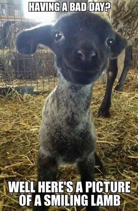 Cute Baby Animal Memes - more funny animal memes 20 pics