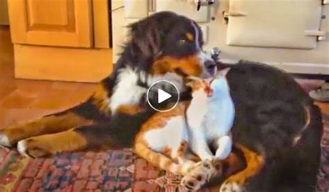 real dogs for sale canines many attempts to be feline s friend