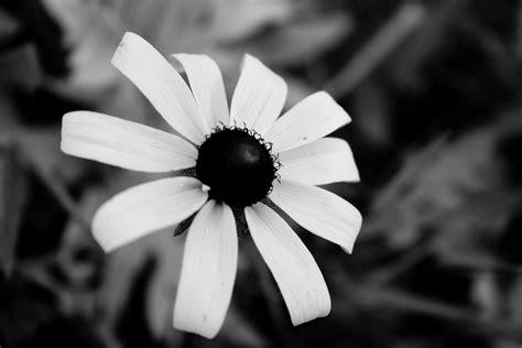 desktop wallpaper black and white flowers black white flowers wallpaper