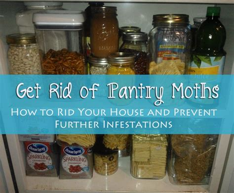 How To Eliminate Pantry Moths by 17 Best Ideas About Pantry Moths On Clean