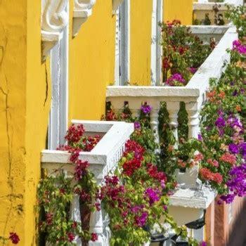 piante per terrazzi fiori e piante per balconi e terrazzi a fiorilandia