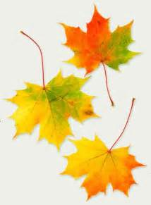 leaf colors fall fruit causes of color