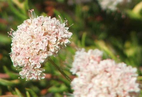 drought tolerant or resistant plants