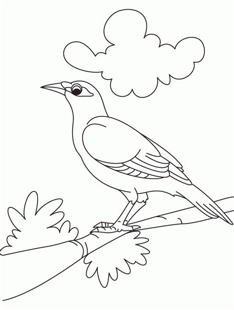 cute bird coloring pages coloring home