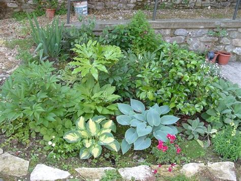 piante nane da giardino piante nane piante da terrazzo piante nane appartamento
