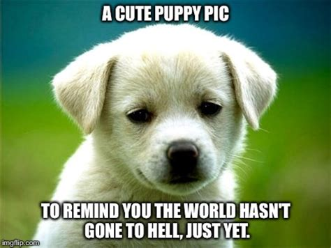 Its Out There For A Pup From The You Are A Photo Pool by It S Ok To Put Out A Non Offensive Meme Every So Often