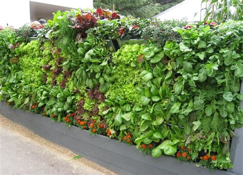 20 vertical vegetable garden ideas total survival