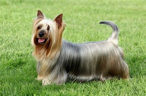 small haired breeds 10 popular small haired breeds and fur