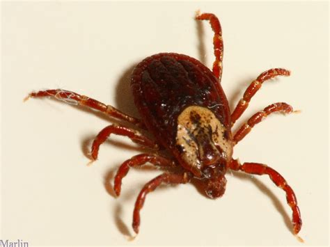 tick on a the glenbrook the adventures of tom sawyer resource page
