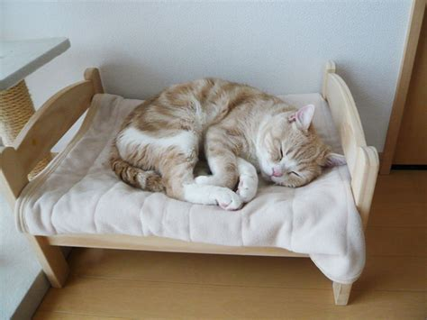 cats beds japanese cat owners turn ikea doll beds into adorable cat