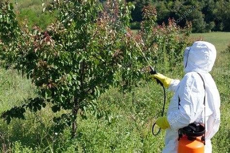 pesticides for fruit trees pesticide spraying fruit tree spraying stock photo