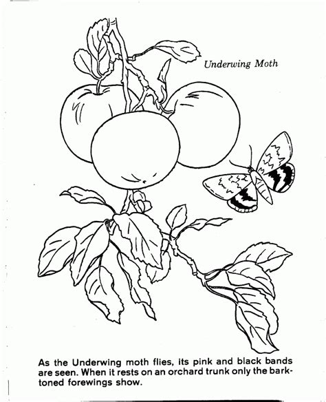 coloring pages nature scenes nature scenes coloring pages az coloring pages