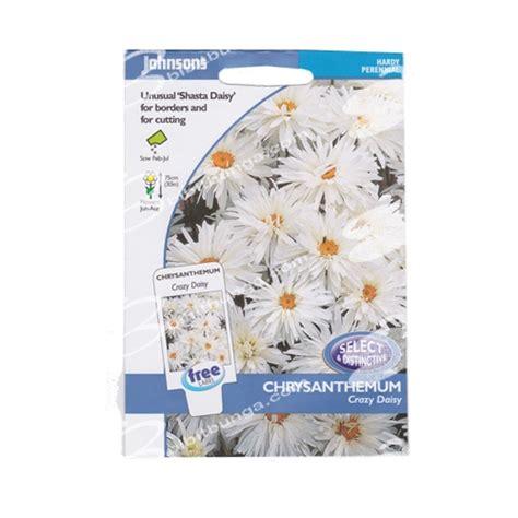 Keterangan On Pic Rp 40000 Uk 75 X 180 benih chrysanthemum 75 biji johnsons seeds bibitbunga