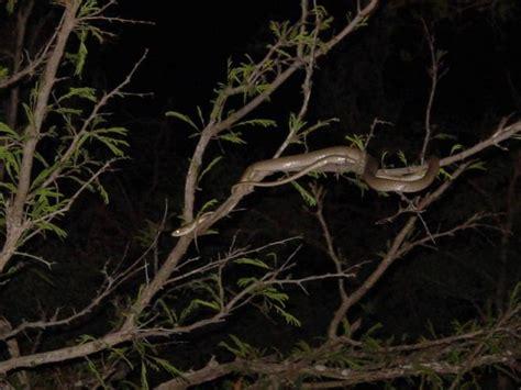 Contact Shader Utuh black mamba venom could contain a fantastic painkiller