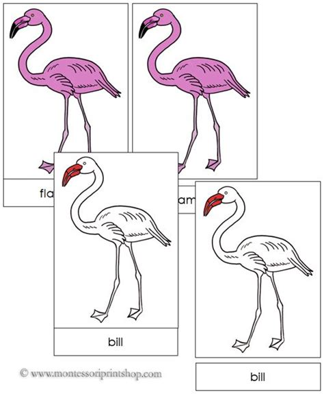 Template For Montessori Nomenclature Cards by 17 Best Images About Zoology Nomenclature In On