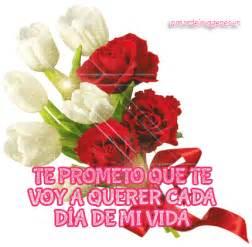 imagenes de rosas q brillan mejores imagenes en movimiento de amor