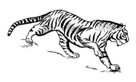 Simply Piringan Hitam Vinyl tiger line drawings for coloring