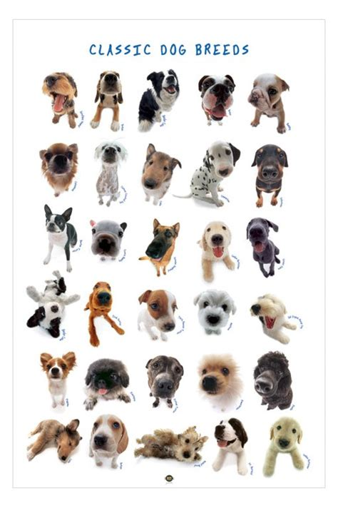 types of dogs wallpaper backgrounds dog breeds