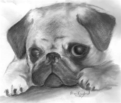 drawings of pugs pug finished by merisstory on deviantart