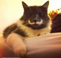 grumpy cat black and white the new grumpy cat hamilton the cat becomes