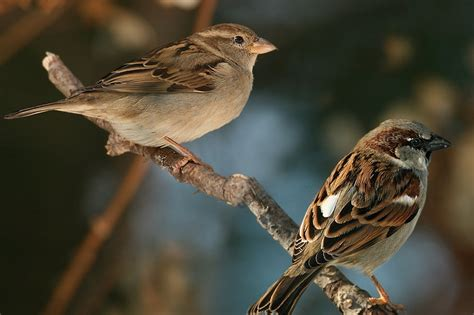 sparrow animal wildlife