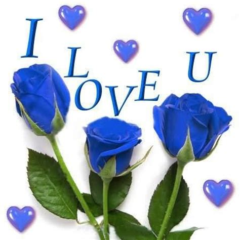 blue you and me i you blue roses www pixshark images