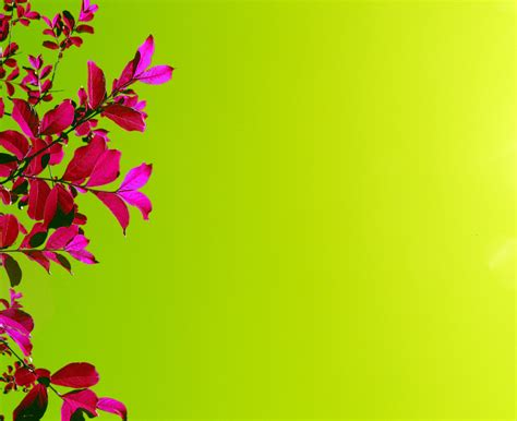 green wallpaper with pink flowers bright pink flowers green backgrounds hq free download