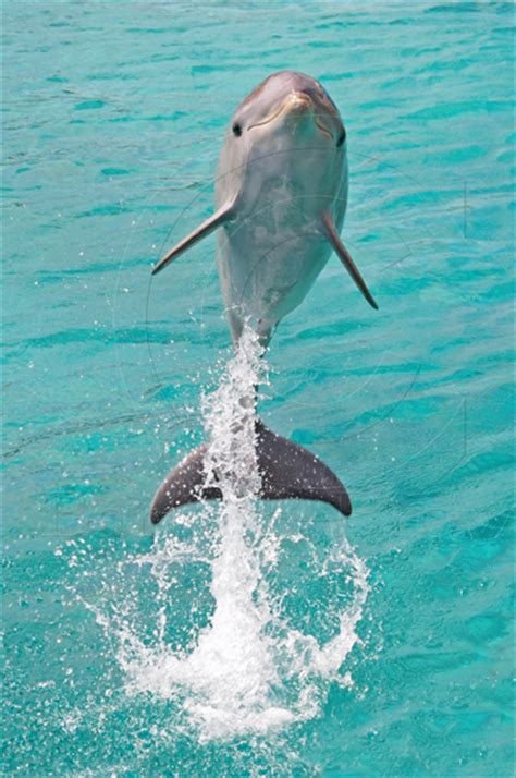 secrets the dolphin smile 25 amazing things dolphins do books really baby dolphins www pixshark images
