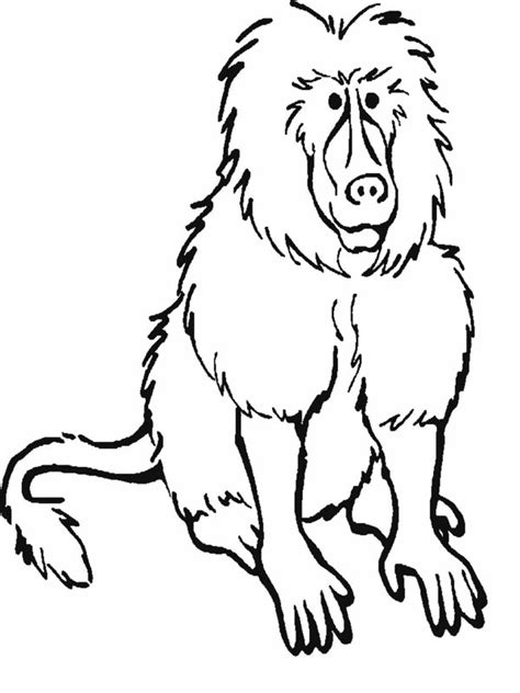 Rainforest Mammals Coloring Pages 7 Rainforest Animals Coloring Pages Biological Science Pictures Of Rainforest Animals To Color