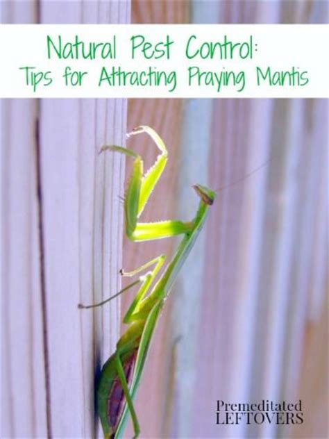 praying mantis for garden pest 17 best images about gardening on