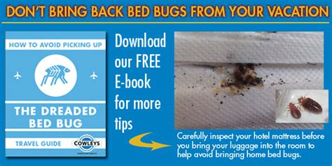 bed bug check bed bug travel tips bed bug prevention cowleys pest services of trenton