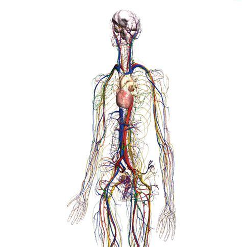 imagenes en 3d del cuerpo humano el mapa del cuerpo humano dibujalia blog