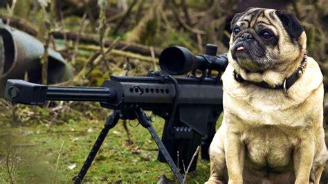 save a pug sniper pug