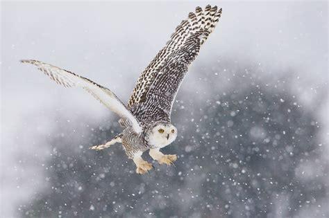 Barn Owl Eggs Cmc Park Amp Zoo Snowy Owl