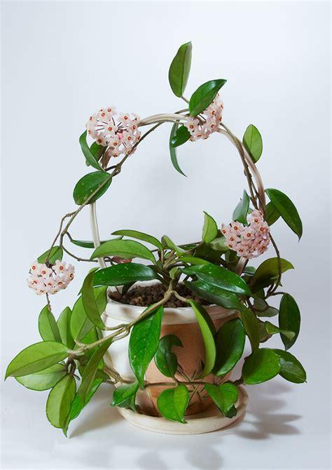 schattenpflanzen zimmer 11 plantas de interior no t 243 xicas para las mascotas mil