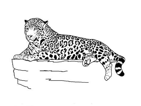 realistic jaguar coloring pages drawn cheetah jaguar pencil and in color drawn cheetah