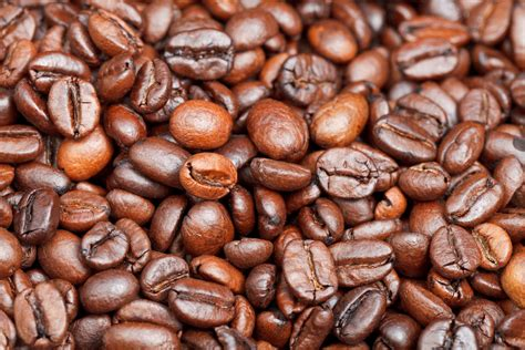 Best Light Roast Coffee 2016
