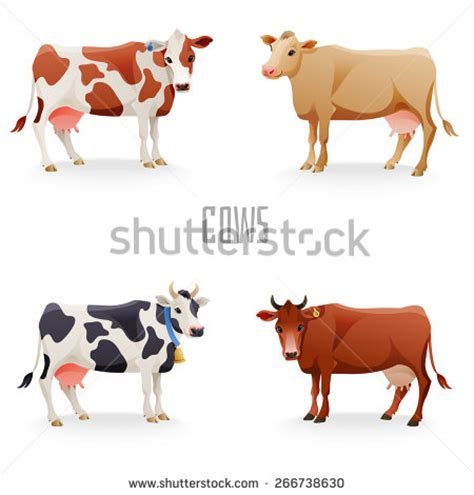 cow colors cow stock images royalty free images vectors