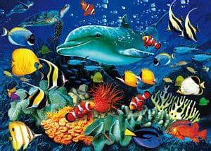 los animales marinos marine definici 243 n de animales acu 225 ticos conceptoydefinicion com