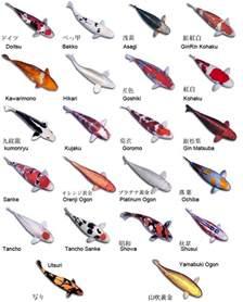 Types Meaning by Koi Fish Coy Fish Types Aquarium Recipeapart