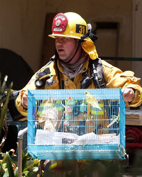 house of pets updated pets rescued from house fire in pasadena crime scene